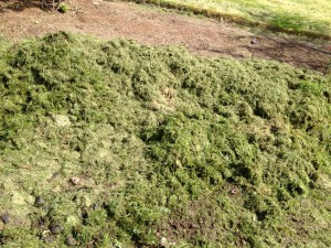 grass clippings bad for horses
