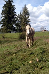 horse grass clippings